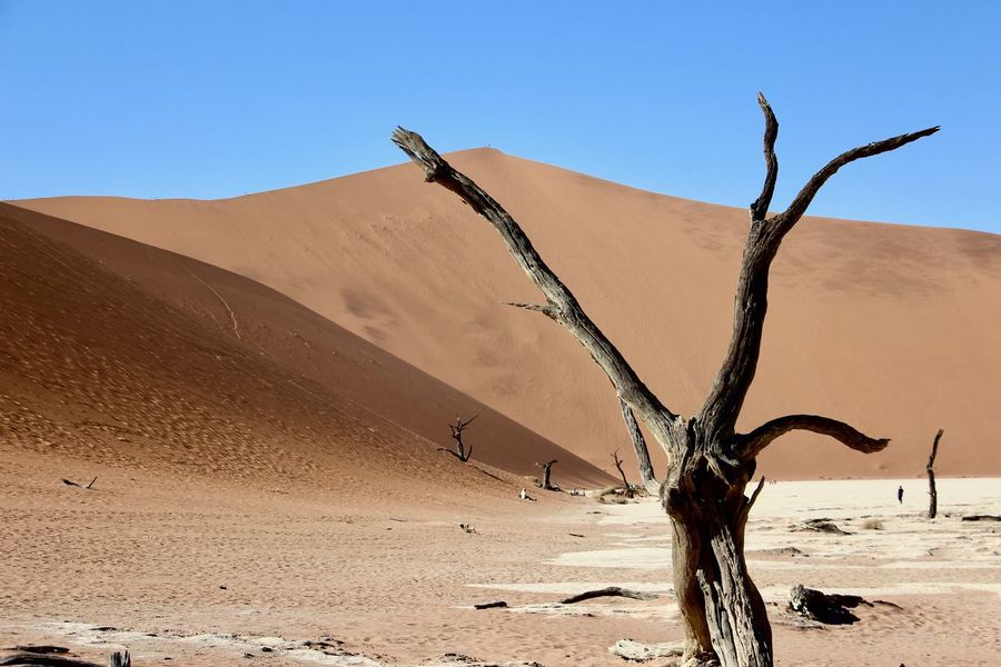 Sossusvlei Arid Climate Bare Tree Beauty In Nature Blue Clear Sky Day Dead Plant Dead Tree Desert Landscape Nature No People Outdoors Sand Sand Dune Scenics Sky Sunlight Tranquil Scene Tranquility Travel Destinations Tree Lost In The Landscape