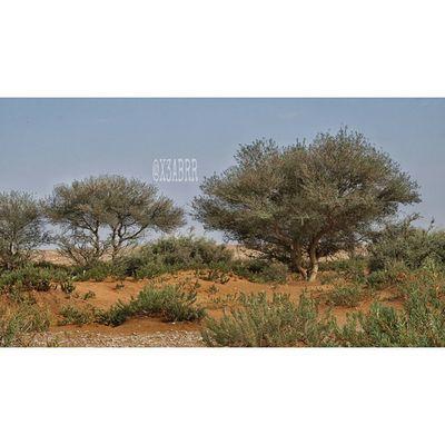 Colorful HDR Nature Photography Rsa_nature Tree طبيعة ارشيفية روضة_خريم تصويري  صورة اشجار ربيع كشته Photo Sonyalpha A57 Picsart السعودية  الرياض رماح KSA Saudi Arabia Saudiarabia السعوديه