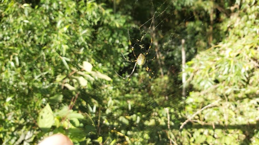 Close-up of spider on web against plants