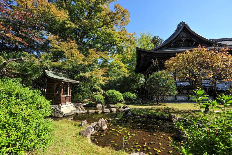 Uzumasa Kōryūji Temple Kyoto Japan Tree Tranquil Scene