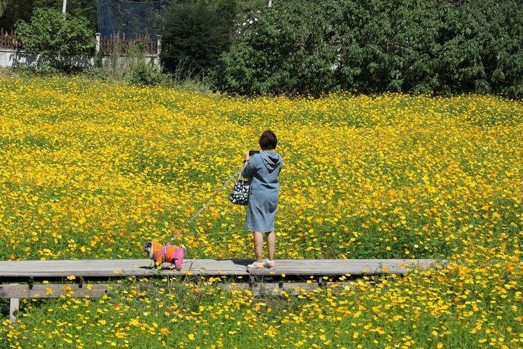 Rear view of woman walking on yellow flowering plants