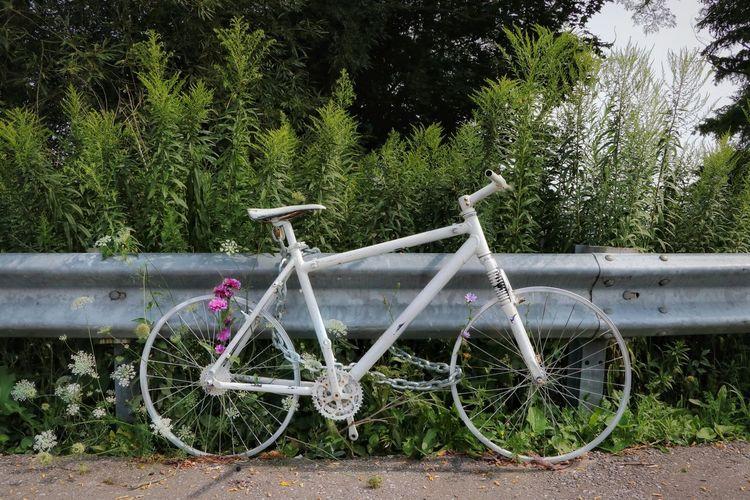 Phantom Bike @eye4invisible With Friends @HannaKoper1 Path In Nature Summer Weeds Bike Ghost Bike Tree Park - Man Made Space Grass Green Color #urbanana: The Urban Playground