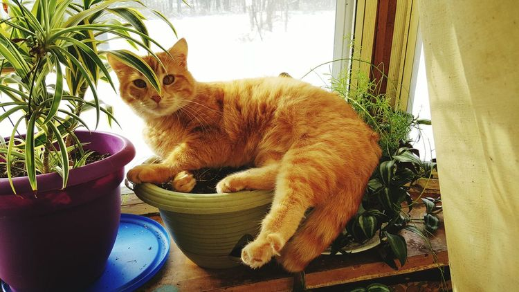 My goofy cat Sunny smushing my asparagus plant with his bum Relaxing Enjoying Life