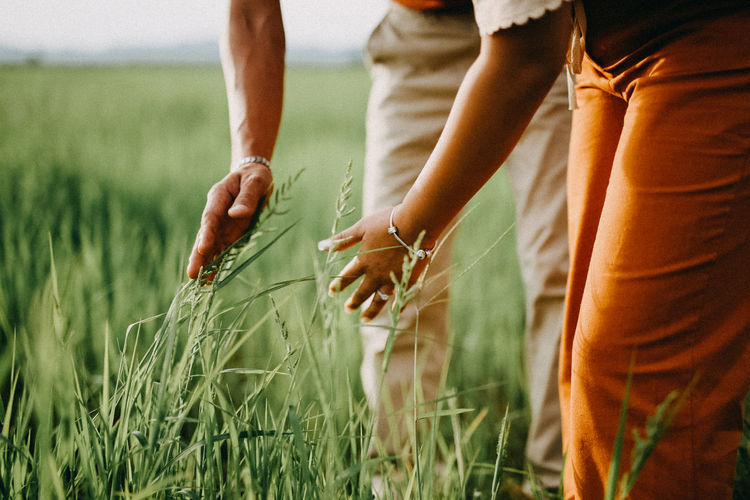 Human Hand Wheat Cereal Plant Child Rural Scene Summer Women Agriculture Field Farm Worker