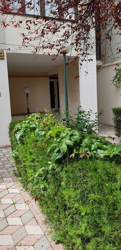 bahçe Door Architecture Grass Green Color Plant