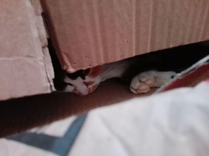 Cat In Box Cat In The Box Cat In A Box Cat In Carton Cat In A Cartoon Box Cat In A Carton Box Pisica In Cutie De Carton WOLFZUACHiV Photography Bedroom Bed Textured  Shadow Close-up