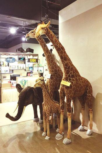 Animal Themes Indoors  Full Length Elephant Mammal No People Day 物