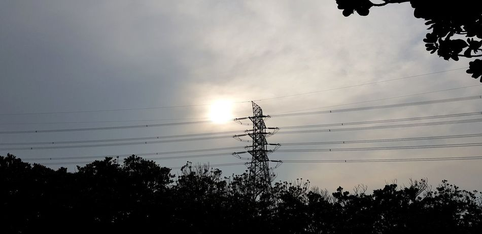 Bird Tree Sunset Silhouette Full Length Togetherness Sky Landscape