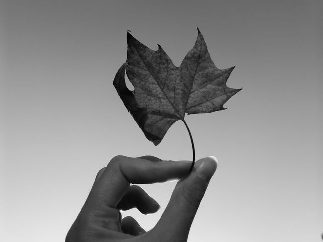 Be.Ready Autumn leaves Autumn Shots  Nature Black And White Photography Beauty In Nature Córdoba, Argentina Leaf Autumn Season Be. Ready.