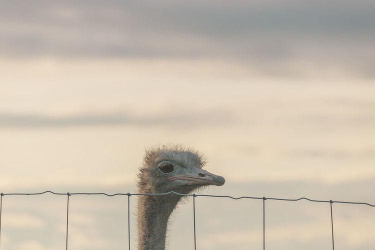 Close-up of a ostrich against sky