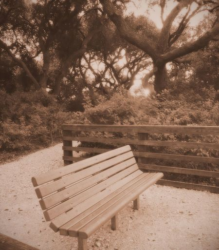 Sepia_collection Sepia Photography Sepia Absence Tree Empty Nature Wood - Material Outdoors Day Tranquility Landscape Scenics Seat Beauty In Nature No People Bench Single Bench Forrest Photography Sunset Evening Walk Beauty In Nature Rockport Texas Before Hurricane Harvey