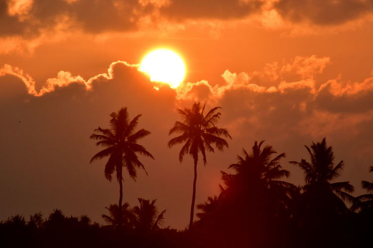 Addu Atoll Maldives Sonnenuntergang Beauty In Nature Day Growth Landscape Malediven  Nature No People Outdoors Palm Tree Scenics Silhouette Sky Sun Sunlight Sunset Tranquil Scene Tranquility Tree