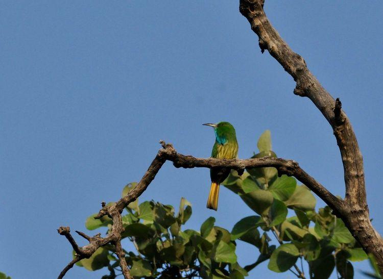 Perching Bird Indian Outdoors India Bandhavgarh National Park Travel Destinations Bandhavgarh