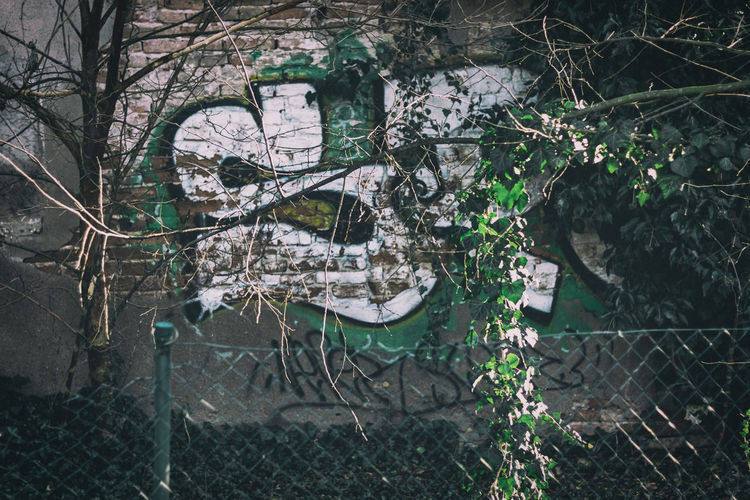 Plants and trees seen through chainlink fence