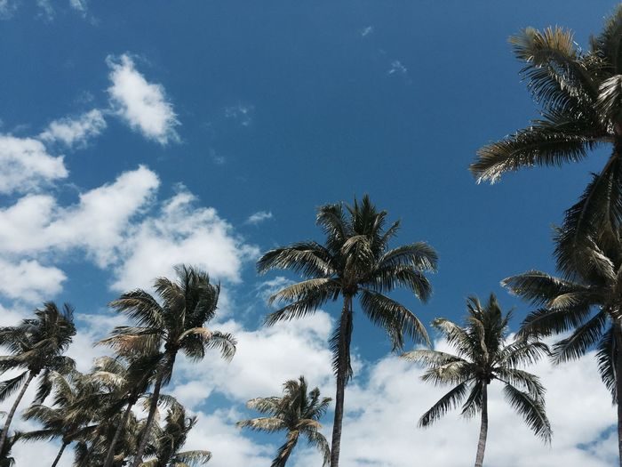 Summer sky Palm Tree Sky Beauty In Nature No People EyeEmNewHere First Eyeem Photo Low Angle View Tree Nature Growth Tranquility Scenics Cloud - Sky Outdoors Tranquil Scene Day Treetop Palm Frond Travel Destinations Explore EyeEmNewHere
