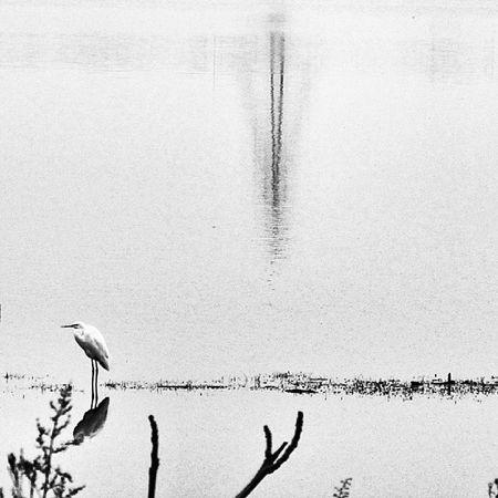 Iran Lake Bird Thursday rain theday vsco bir_dakika bw بپسند ایران reflect yansima kuş