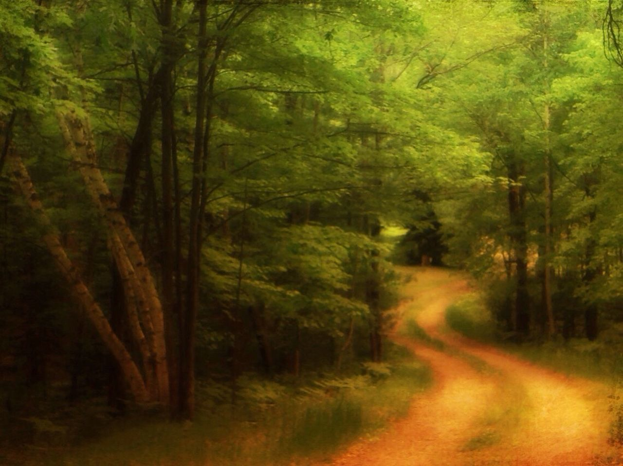 nature, forest, tree, landscape, no people, outdoors, road, grass, day, beauty in nature