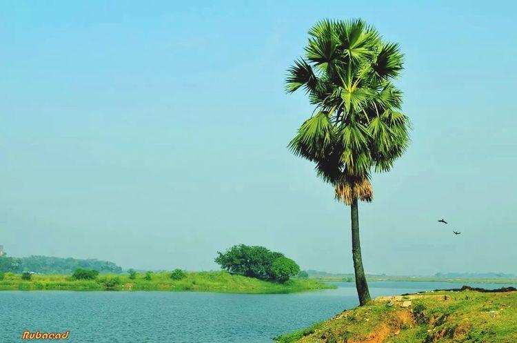Rural Scene Bangladesh Nature River