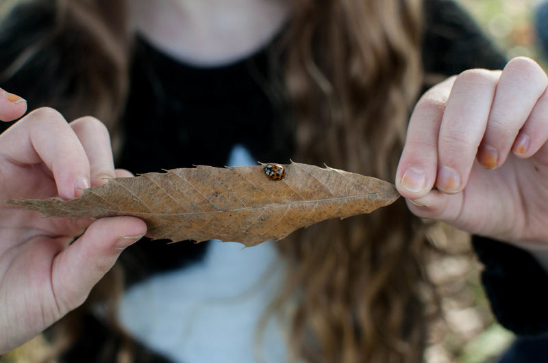 Young Girl Holding a Ladybug on a Leaf Lady Bug Ladybug Nature Close-up Fingers Holding Human Body Part Human Hand Insect Leaf Leisure Activity Lifestyles One Person Outdoors Real People