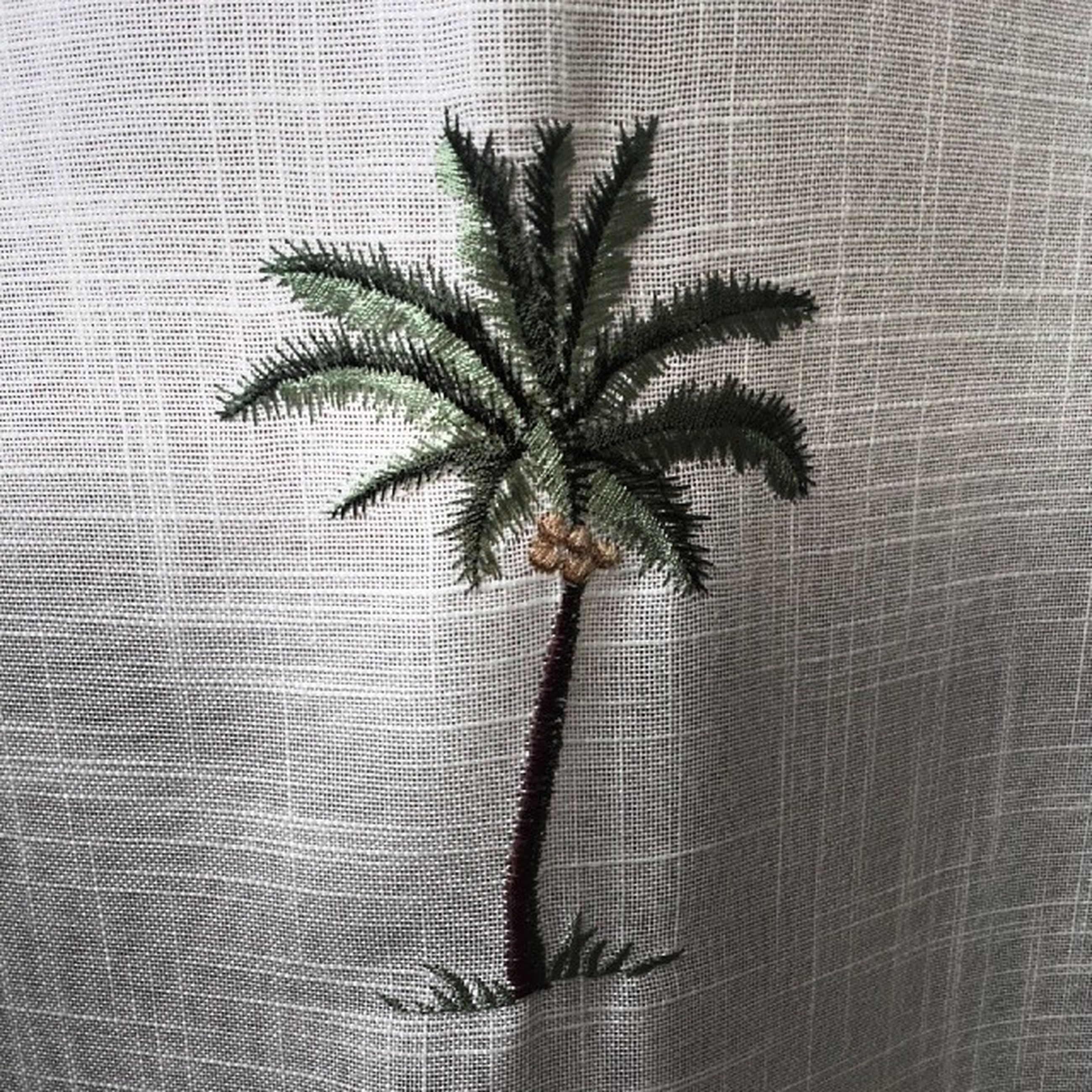 wall - building feature, indoors, close-up, wall, pattern, growth, reflection, palm tree, textured, leaf, day, no people, glass - material, nature, green color, plant, built structure, shadow, curtain