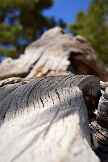 Natural Curves Evolution  Perspective Upward View Focus Natural Curve Bark Texture Bark Tree Nature Day No People Sunlight Selective Focus Close-up Beauty In Nature Pattern