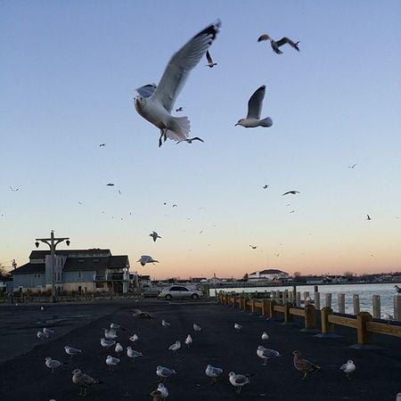 Seagulls in flight Winter Bay Sea sunset nofilter note3 picoftheday LongIsland