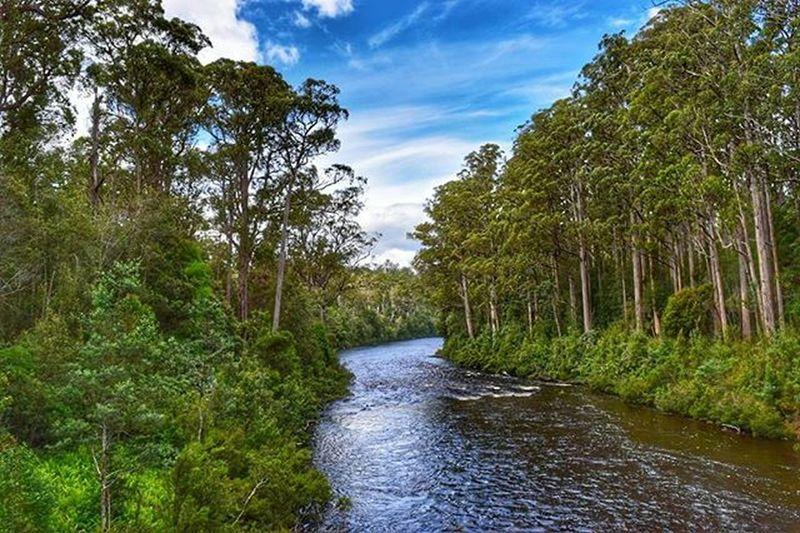 Tahuneairwalk Huonriver Tasmania Visittasmania Igeraustralia Iglobal_photographers River Nature Landscape Abcmyphoto