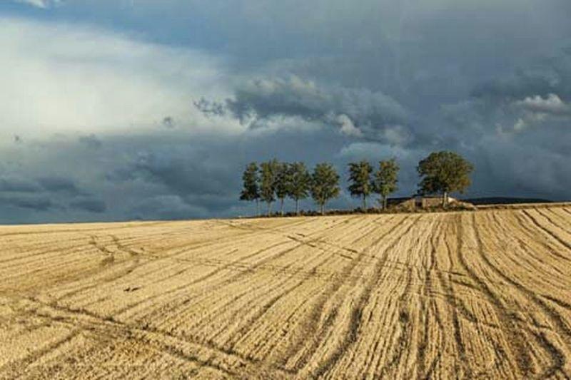 Es habitual ver en la Rioja largas extenciones de terrenos de diferentes cultivos que invitan a parar para disfrutar de la vista. Scenery España Larioja EyeEm Eye4photography  EyeEm Gallery EyeEm Best Edits Getty Images Paisajes