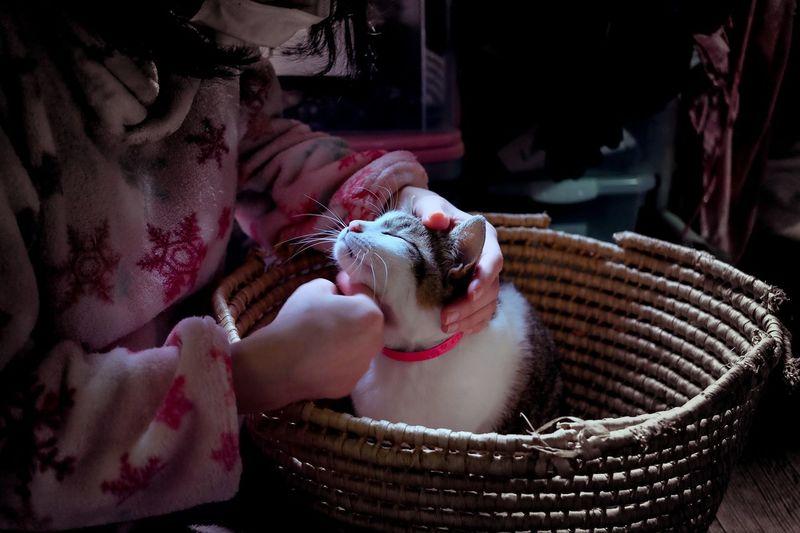 Japan KAWAII Kitty Neko Animal Themes Basket Cat Cats Day Domestic Animals Girl Indoors  Kitty Cat Mammal One Animal Pets Real People ねこ First Eyeem Photo