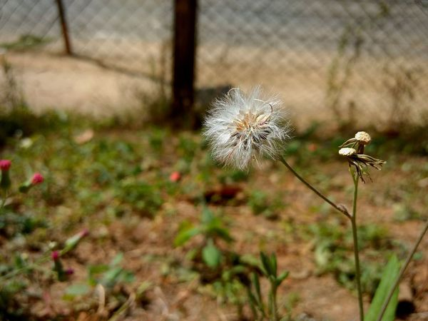 Flower Plant Uncultivated Nature Growth Fragility Wildflower Flower Head Focus On Foreground Day Close-up No People Thistle Outdoors Freshness Poppy Beauty In Nature Blur Deptoffield Shadows 3XPSUnity Shadows_collection EyeEm Best Shots 3XSPhotography EyeEmNewHere