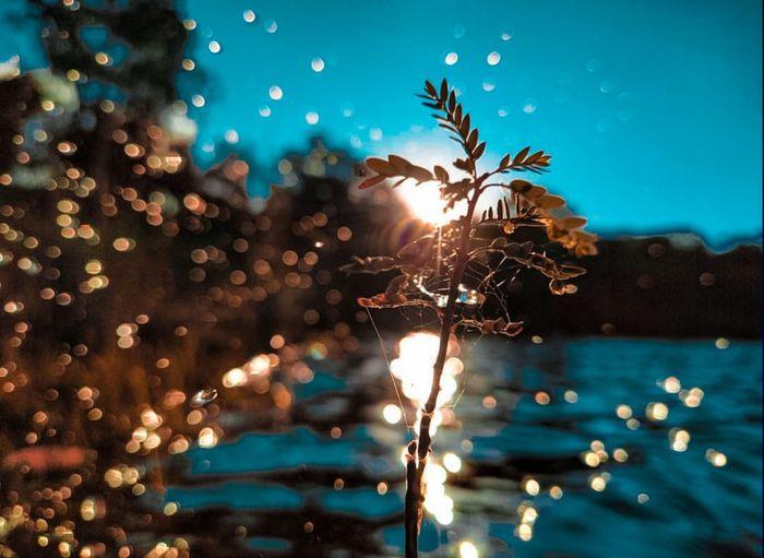 Close-up of wet illuminated lights at night