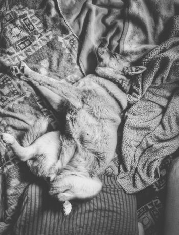 thats my dog Akita Dog Sleeping Funny