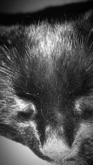 Pets Master Grimly I Love My Cat Sleeping Kitteh