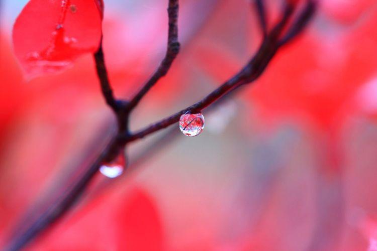Drop Nature