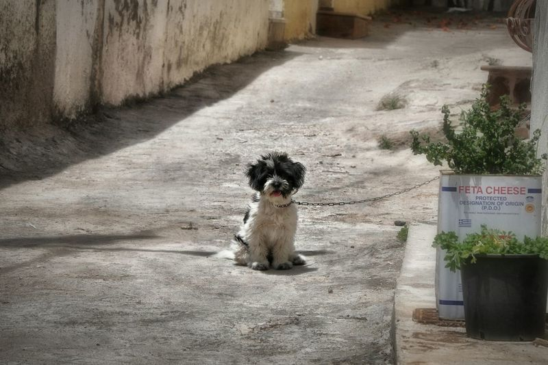 Here Belongs To Me Dog Alley Dogoftheday Dogs Of EyeEm Neighborhood Guard Dog Guard FUNNY ANIMALS Alone Streetphotography My City Taking Photos - Greek Islands Chios Greece Chios Greece