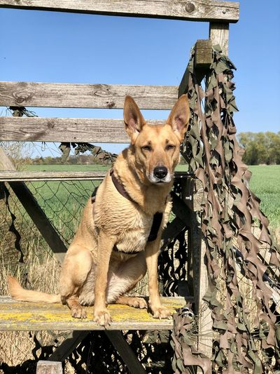 Portrait of a dog on wooden fence