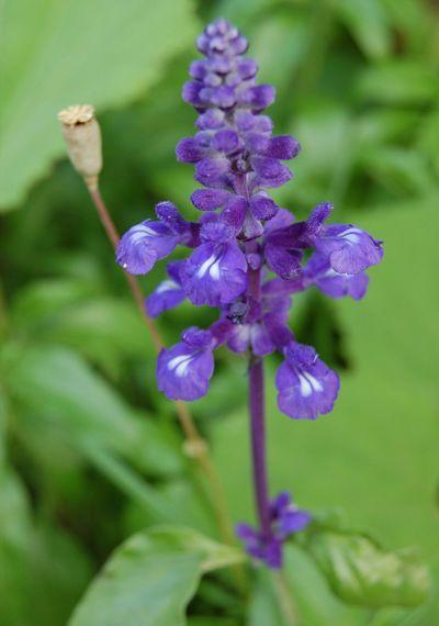 Flower Flowers Flor Naturaleza🌵🌻🎶 Naturalesa Nature
