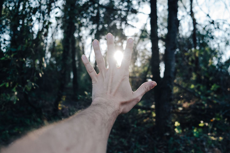 Cropped image of hand against sunlight streaming through trees
