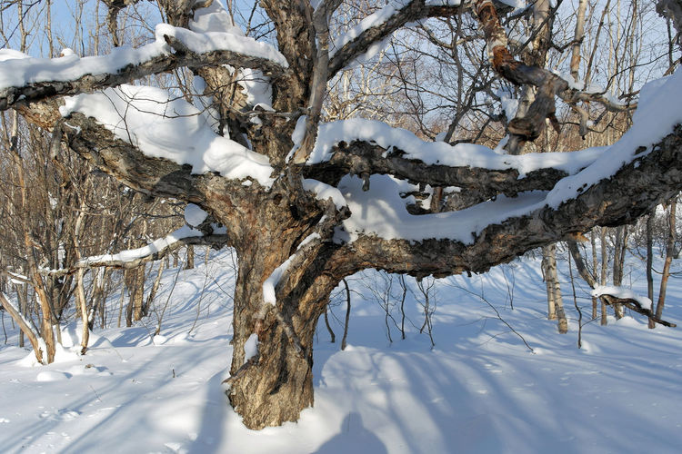 Beauty In Nature Branch Cold Temperature Day Forest Landscape Nature No People Outdoors Scenics Shadow Snow Sunshine Tranquility Tree Tree Trunk Weather White Color Winter