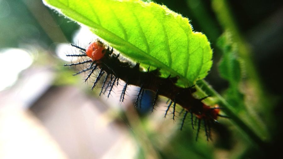 caterpillar n leaf Insect Leaf Close-up Green Color Plant Animal Antenna