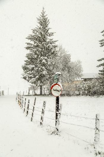 Erster Schnee Natur Nature Outdoors Schnee Snow Winter Wintereinbruch