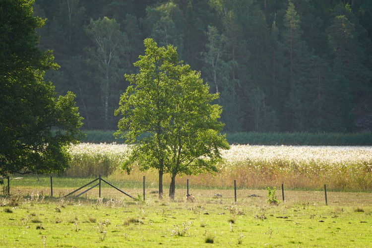 Barrier Beauty In Nature Day Environment Field Forest Grass Green Color Growth Land Landscape Nature No People Non-urban Scene Outdoors Plant Scenics - Nature Tranquil Scene Tranquility Tree