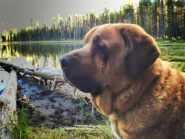 Dozer ☺️ Animal Themes Domestic Animals Dog Pets One Animal Close-up Mammal Animal Head  Tranquility Growth Day Nature Tranquil Scene Outdoors Looking No People Zoology Countryside