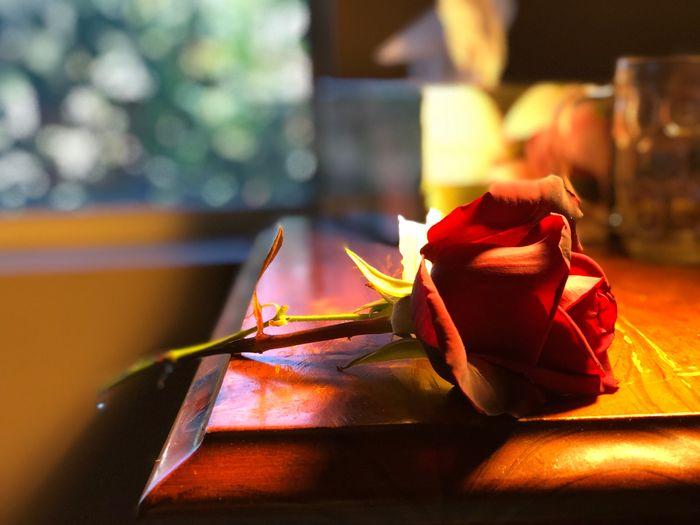 Rose - Flower Close-up Testing My Camera