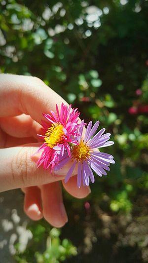 Flower Flower Head Nature Outdoors Beauty In Nature Hand Pink Flower Purple Flower Grass