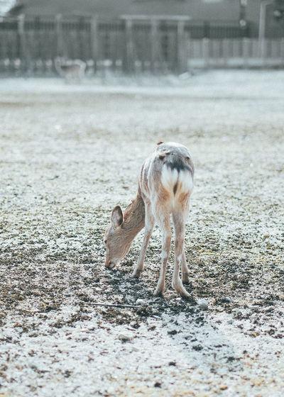 Horse on ground