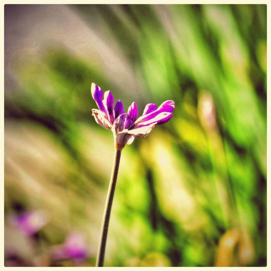 Flowermagic Flowerporn Flower Collection Flowerpower