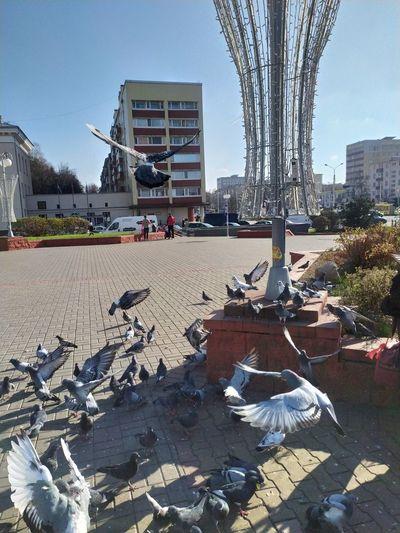 View of pigeons in park against buildings