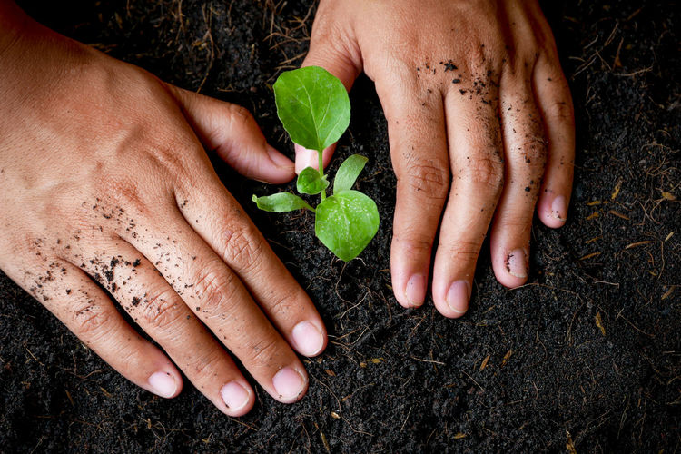 Leaf Human Hand Plant Part Dirt Human Body Part Hand Nature Plant Gardening Holding One Person Growth Planting Real People Lifestyles Food Green Color Beginnings Healthy Eating Body Part Care Finger Dirty Outdoors