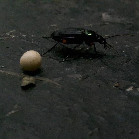 Terkadang serangga ini sering mengganggu Serangga Hewan Insect Hitam